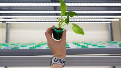 Photo of iFarm raises €3.3 million for its automated indoor farming solutions