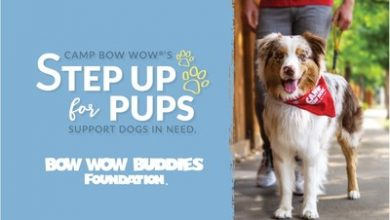 Photo of The Bow Wow Buddies Foundation® Launches Virtual Dog Walking Challenge to Raise Funds for Pups in Need